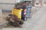 Traboccanti di fiori appassiti: ecco i cassonetti del cimitero di Salemi