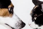Fumo passivo, a rischio tumori anche cani e gatti