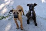 Caltanissetta, multe ai padroni dei cani che sporcano