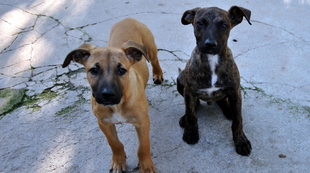 cani, rifugi, Palermo, Animali, Vita