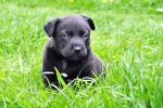 Cattura l'attenzione e invita al gioco: parlare ai cani come ai bimbi aiuta