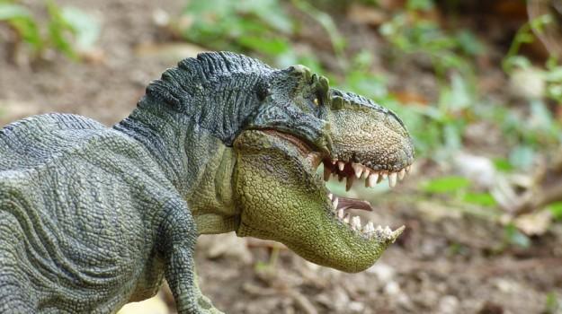 dinosauri, pazienti, Sicilia, Società