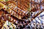 Quadri e bozzetti di Giacomo Balla nella fabbrica del cioccolato