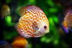 Nei pesci mercurio fino a 7 volte in più, esperti: è colpa del clima che cambia