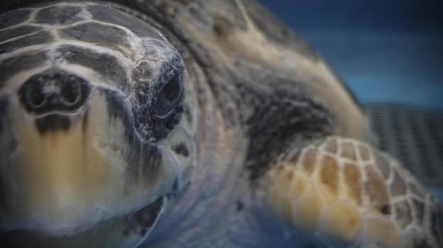 Apre il centro tartarughe pi grande del mediterraneo for Vasche per tartarughe marine