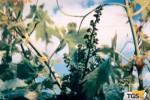 Sorgerà a Marsala un museo dedicato al vino