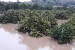 Agrumeti inondati a Francofonte - Foto da Coldiretti Sicilia