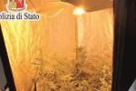 """""""Serre per la droga in casa"""", un giovane a processo a Caltanissetta"""