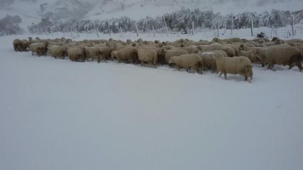coldiretti, danni, Maltempo, neve, Sicilia, Economia