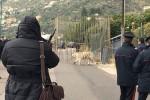 Paura a Monreale, tigre fugge dal circo: catturata con una gabbia