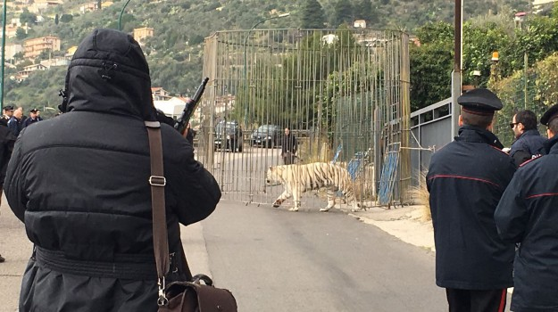 circo, tigre, Palermo, Cronaca