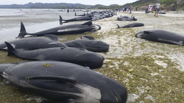caccia balene, Sicilia, Mondo