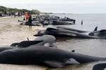 Moria di balene in Inghilterra: almeno 3 spiaggiate sulla cosa orientale