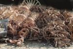 Ruba cavi elettrici a un'azienda di Ficarazzi: arrestato