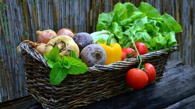 AGRICOLTURA, coltivazione, Sicilia, Salute, Società