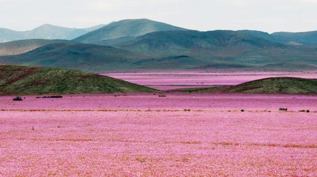 deserto, marte, Sicilia, Società