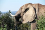 Allarme elefanti, in 10 anni uccisi 25 mila esemplari