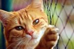"""""""Guerra"""" per il gatto tra due vicine finisce davanti al giudice"""