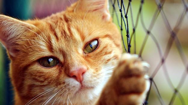 felini, giornata del gatto, Sicilia, Animali, Vita