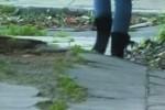 Marciapiedi rotti dalle radici: piano di recupero a Palermo