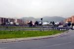 Piantati 50 nuovi alberi di carrubo nella rotonda di via Leonardo Da Vinci a Palermo