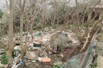 Bracconieri in azione sui colli di Messina: uccisi 3 cinghiali