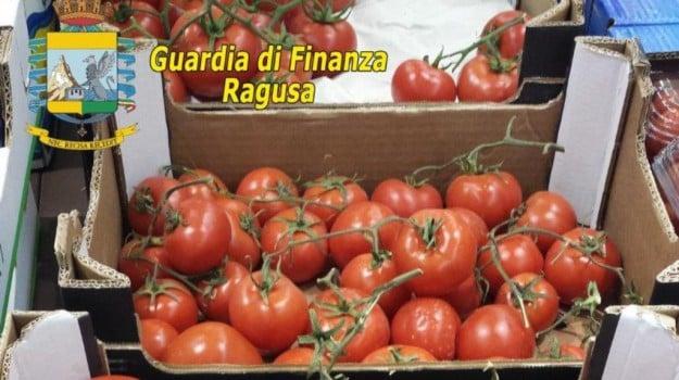 frode, guardia di finanza, pomodoro, pomodoro albanese, Vittoria, Ragusa, Cronaca