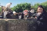Gatti randagi a Menfi sfamati grazie all'aiuto di svizzeri e tedeschi