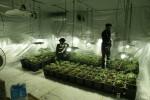 Serra di cannabis coltivata in casa, arrestato 32enne a Partinico