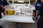 """Niente tracciabilità"", sequestrati 850 kg di pesce in provincia di Agrigento"