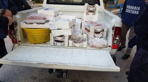 capitaneria, pesce, sequestro, Agrigento, Cronaca