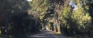 Palermo, prova a violentare una donna che fa jogging alla Favorita: fermato un uomo