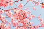 Il giorno dura quanto la notte: addio inverno, scocca l'equinozio di primavera
