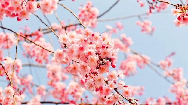 equinozio di primavera, giorno, Sicilia, Vita