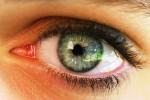 L'intelligenza? Dipende dalla grandezza delle pupille