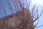 Alberi a Palermo, duemila in arrivo in città - Le immagini da via Mongitore
