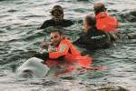 """Pantelleria, salvarono dei delfini in difficoltà: premiati gli """"eroi del mare"""""""