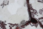 Scoperti i fossili dei primi esseri viventi, sono le tracce di vita più antiche sulla Terra