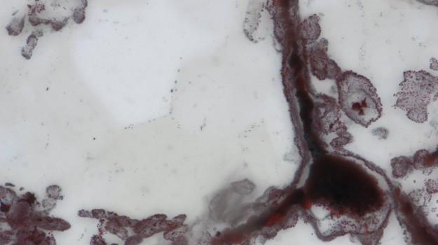 esseri viventi, fossili, Sicilia, Società