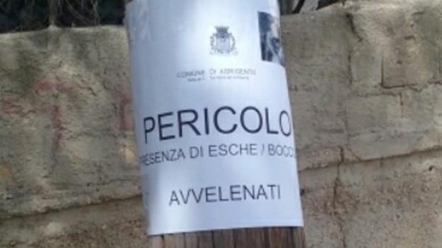 gatti avvelenati, indagini, Marina di Ragusa, Ragusa, Cronaca