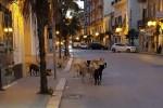 Troppi cani abbandonati, allarme in provincia di Agrigento
