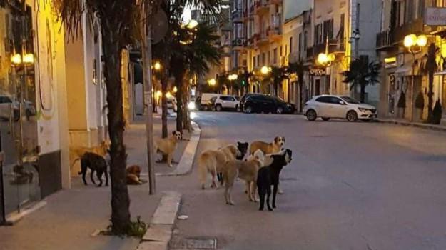 abbandonati, agrigento, cani, Agrigento, Cronaca