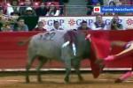 Messico, un torero in gravi condizioni dopo essere stato incornato - Video