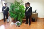 In casa una serra con 9 piante di marijuana: un arresto a Palermo
