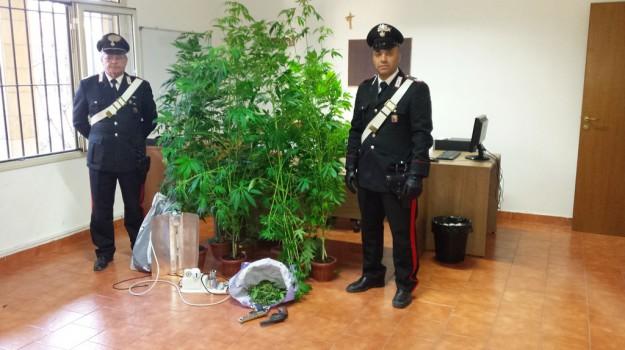 carabinieri, droga, marijuana, Palermo, Cronaca