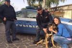 Cane preso a morsi dal padrone e salvato dai poliziotti: ora è adottato a Palermo - Foto