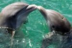 Come riparare il cervello dell'uomo? I delfini possono svelarne il segreto