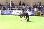"""Successo alla """"Favorita"""" per i cavalli arabi a Palermo - Video"""