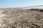 Canne spiaggiate a Scicli: verranno triturate e poi smaltite