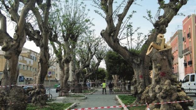 alberi, eritrine, Trapani, Cronaca
